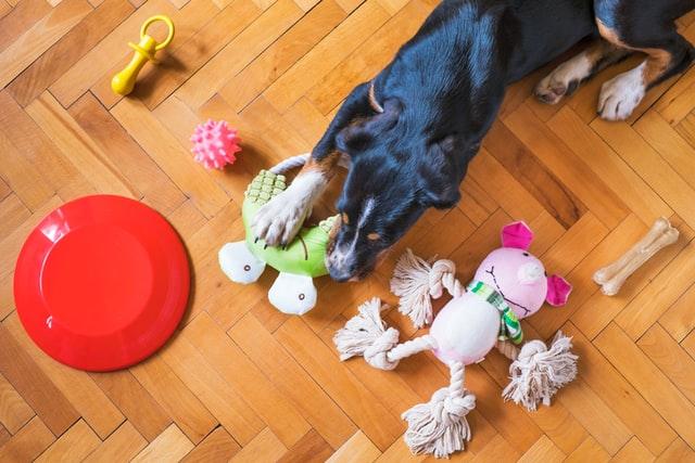 hund med leksaker